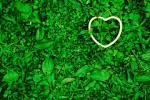 green_branding