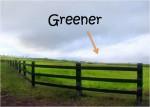 Greener Pastures 3