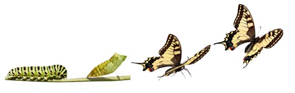 metamorphosis Necessity is the Mother of Reinvention