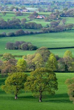 rural Cheshire