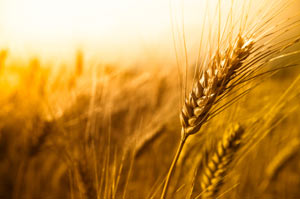 Lessons From Food Security: Telling Us What Matters